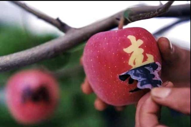 Manzana perfecta Japonesa